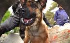 Jekkyl, le seul chien sauveteur de la zone NAGE